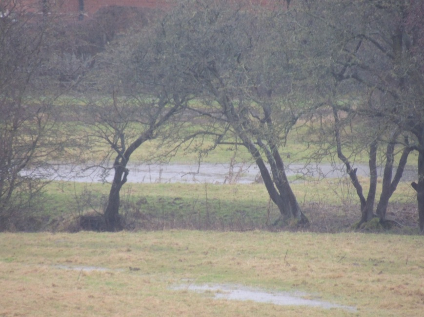 14_02_2015 Fields in Flood (1)