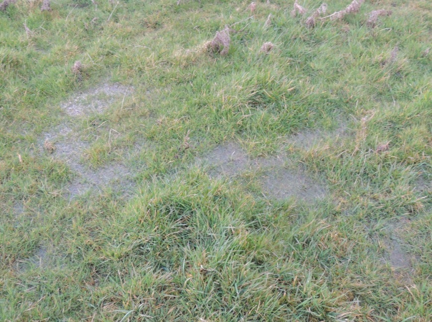 Typical surface water showing on top of the grass.