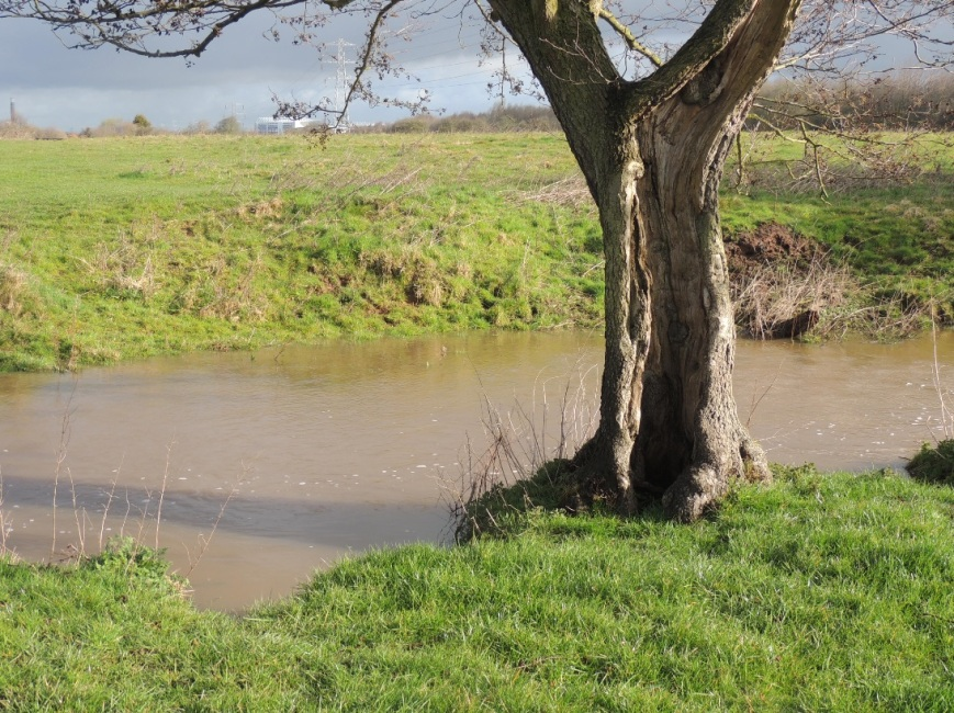 Another inconvenient fact.  The Newstead Brook near the top of its bank after just one days rain.